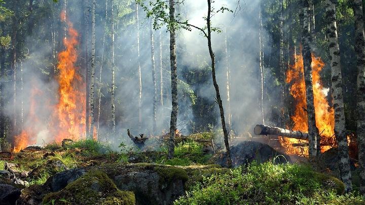 Лесной пожар, лес в огне