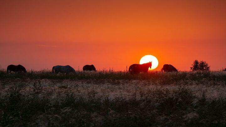 Лошади с Куликова поля перешли в «ночной режим»