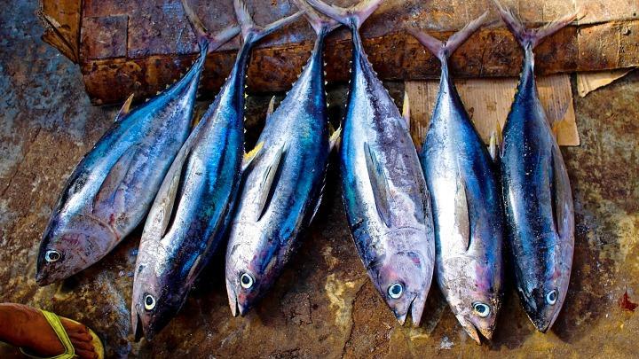 Рыба, рыбная продукция