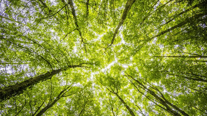 Ефремовский лес ушел под незаконную застройку