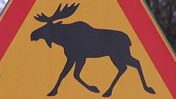 В Тульской области в результате ДТП с лосем погибли двое мужчин