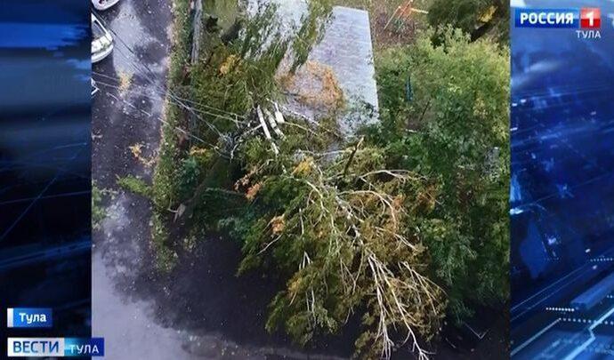 В пяти тульских муниципалитетах ветер повалил деревья