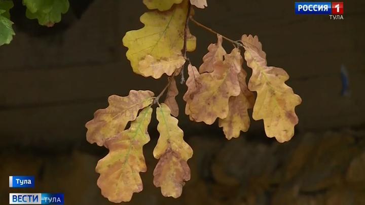 В Венёве дуб включили в реестр памятников живой природы
