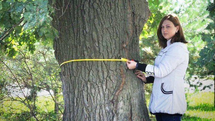 Дуб в Веневском районе внесли в реестр старовозрастных деревьев