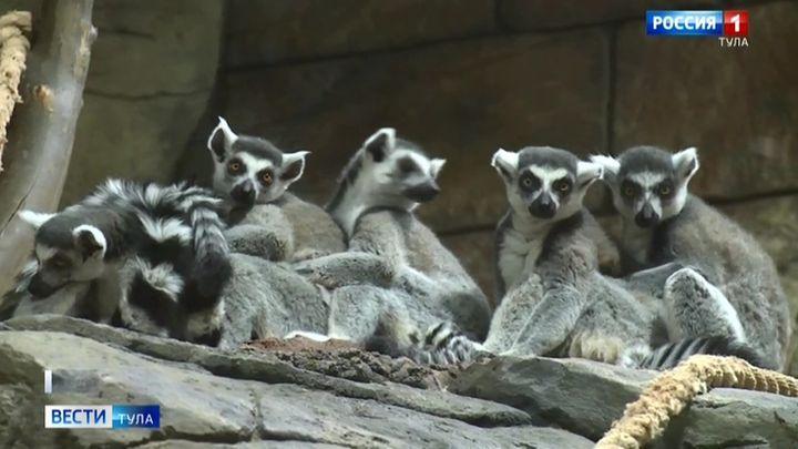 «Виртуальный зоопарк» открыли в Туле
