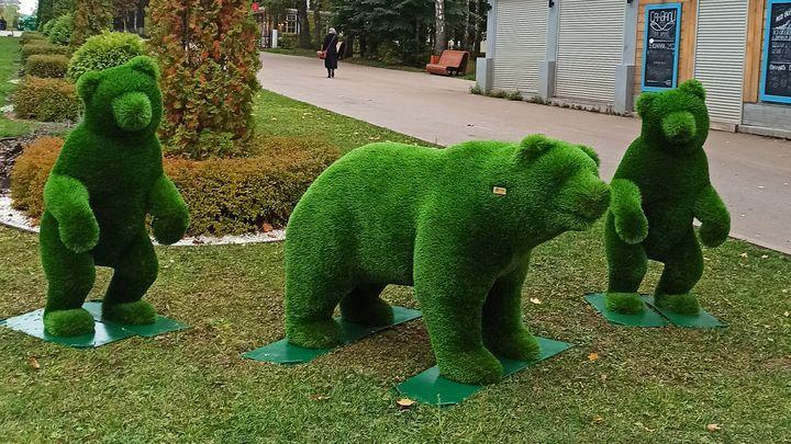 Три медведя замечены в Центральном парке Тулы