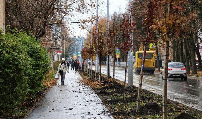 В Новомосковске на улице Березовой высадили рябины