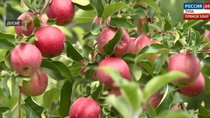 В Тульской области яблони пострадали от бактериального ожога